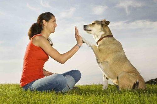 Anjing dan Pemiliknya