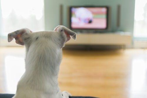 Anjing nonton TV