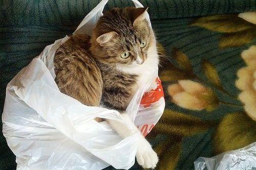 Kucing dan kresek