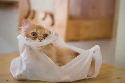 Kucing dan plastik