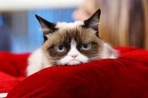 Kucing merengut