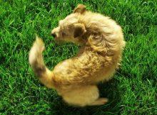 Anjing Mengejar Ekornya Sendiri