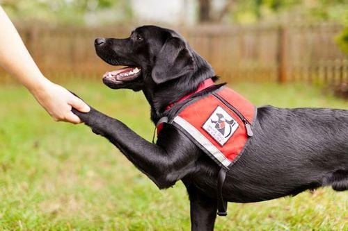 Anjing Pekerja