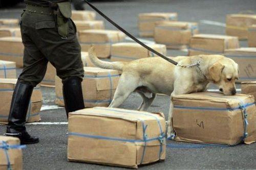 Anjing Pendeteksi