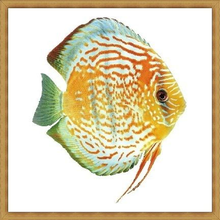 Dream Diamond Discus