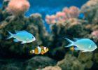 Ikan Air Laut Indah