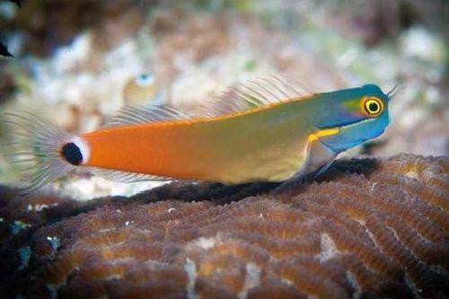 Ikan hias air laut terunik