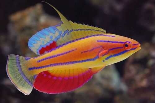 Unduh 75+ Gambar Gambar Ikan Laut Terpopuler