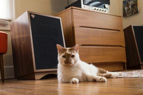 Kucing Apartemen