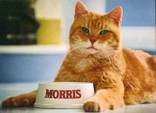 Kucing Mata Hijau Morris