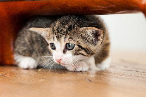Kucing Sedang Takut