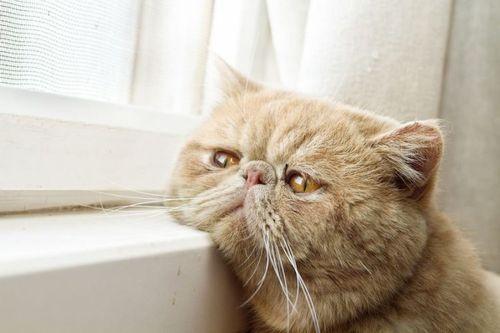 Kucing Sendirian