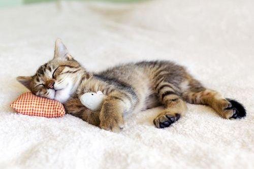 Kucing Suka Tidur