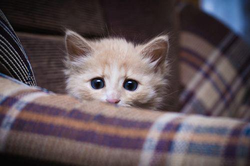 Kucing Takut
