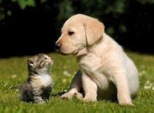 Kucing benci anjing