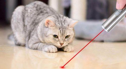 Kucing bermain laser