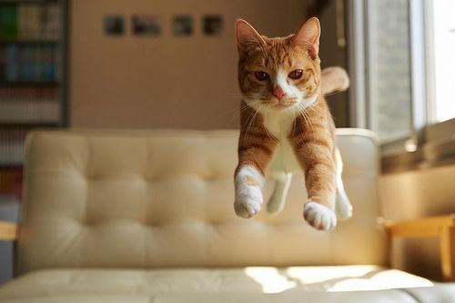 Lompatan kucing