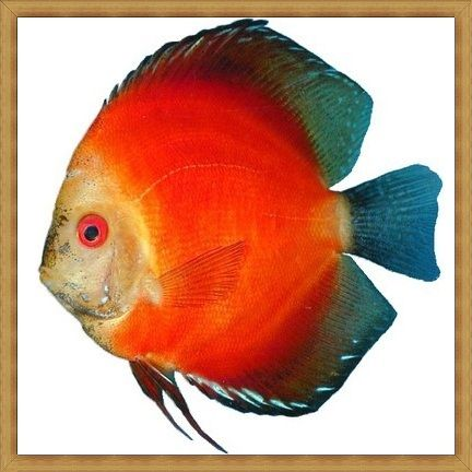 Marlboro Super Red Discus