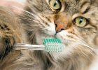 Merawat Gigi Kucing