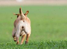 Anjing lari ketakutan