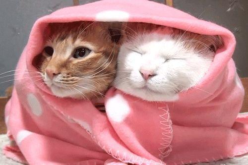 Gambar Kucing Kedinginan