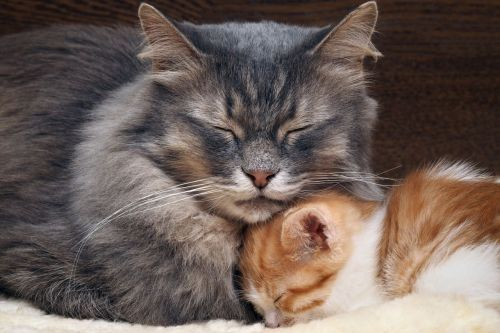Gambar kucing dan anaknya
