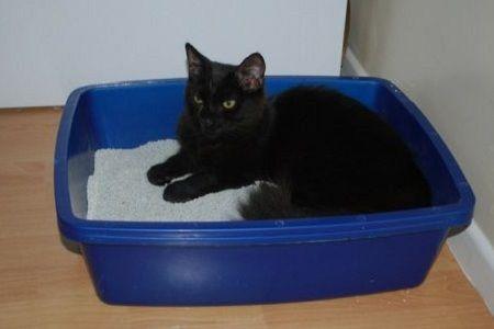 Kucing berbaring di litter box