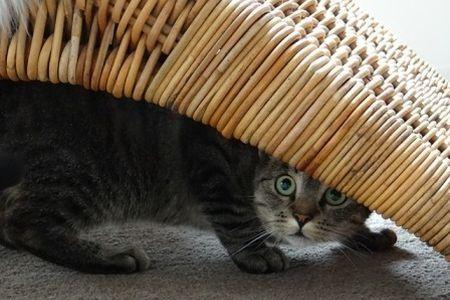 Kucing bersembunyi di bawah tempat tidur