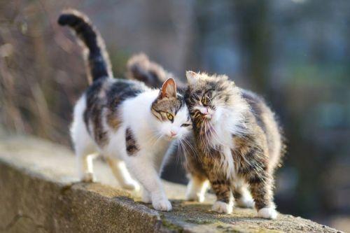 Kucing di luar rumah