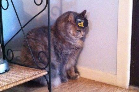 Kucing di pojokan