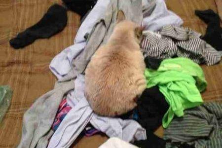 Kucing duduk di pakaian
