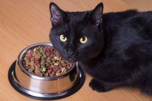 Kucing enggan makan