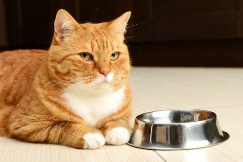 Kucing gak doyan makan