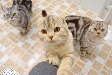 Kucing ikut ke kamar mandi