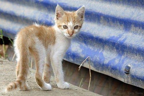 10 Tips Ampuh Untuk Menggemukkan Kucing Yang Kurus Gerava Ikan Hias Burung Kicau Kucing Anjing