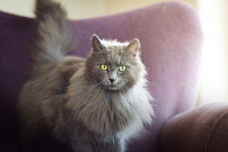 Kucing melotot