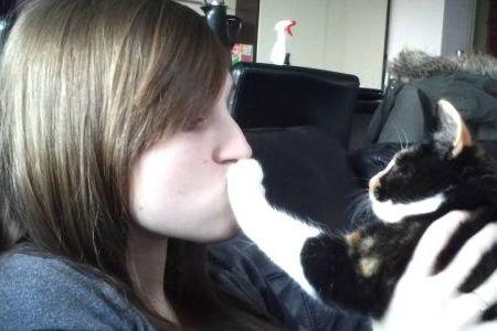 Kucing mencakar wajah
