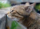 Kucing mengendus