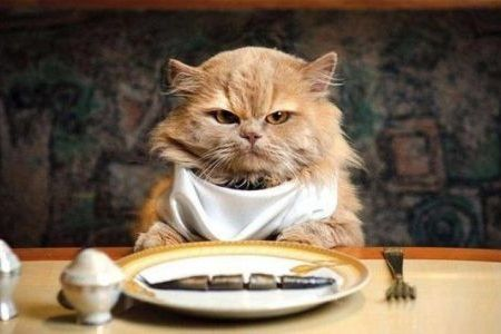 Kucing selalu lapar