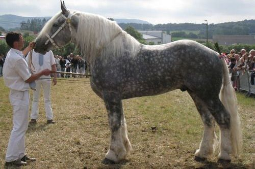 Kuda terbaik di dunia