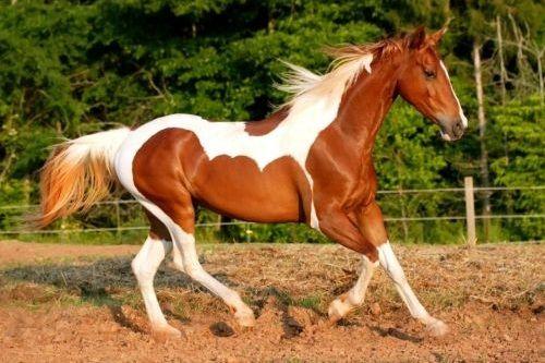 Kuda Paint