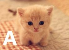 Nama Kucing Huruf A