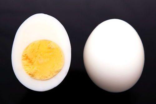 makanan lovebird telur rebus