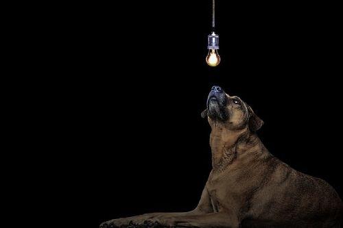 Anjing di malam hari