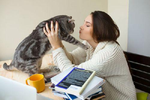 Bahasa Kucing