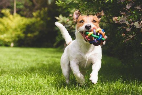 Foto anjing bahagia