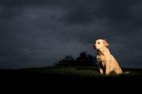 Gambar anjing malam