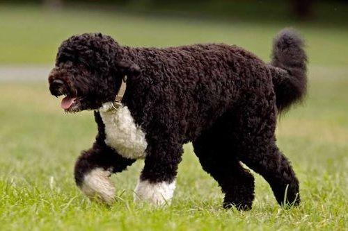 Gambar anjing pengendus