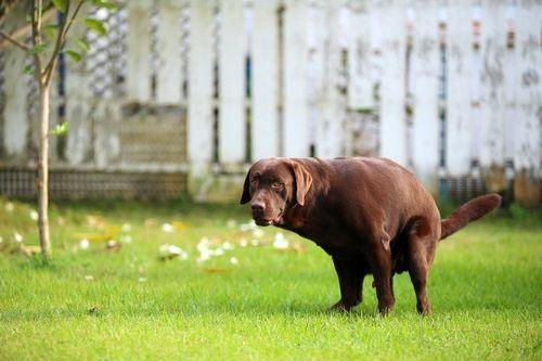 Gambar anjing pup