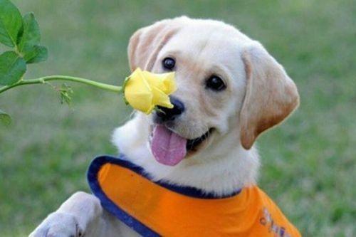 Gambar anjing senyum